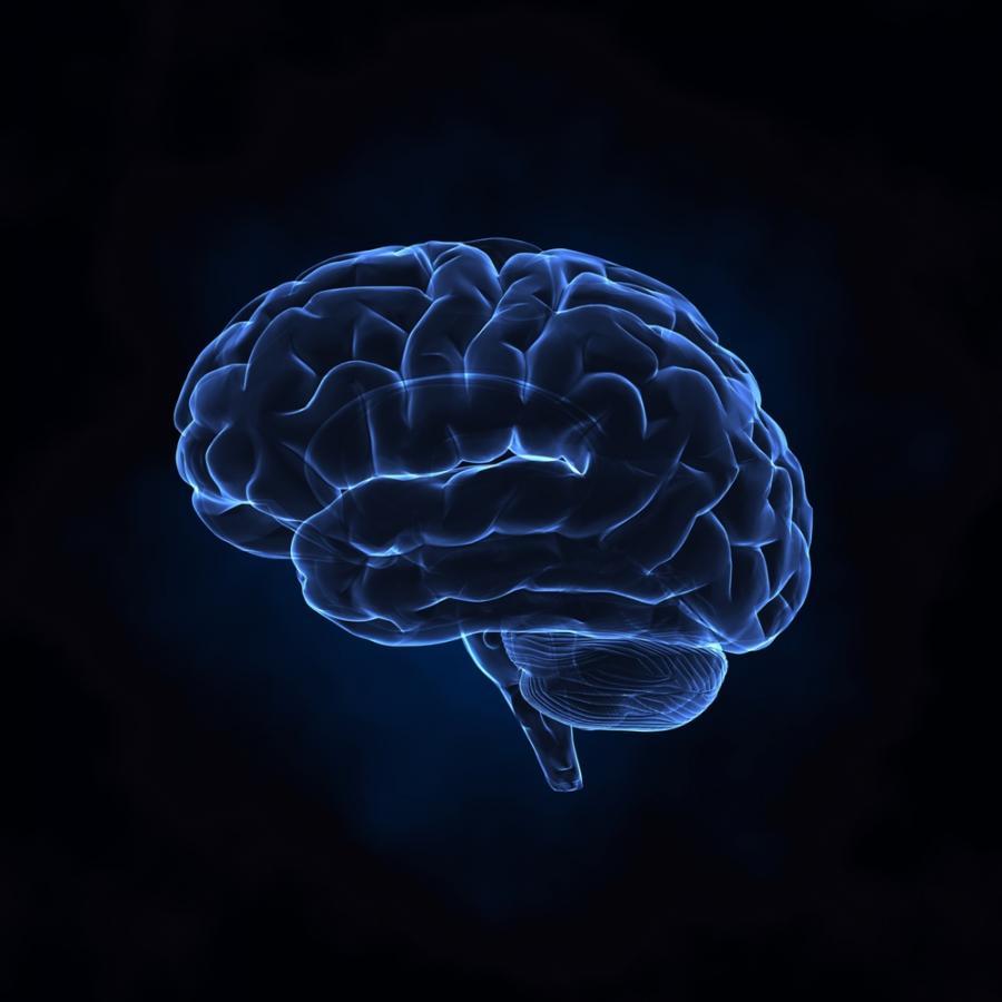 Kofeina spowalnia rozwój mózgu